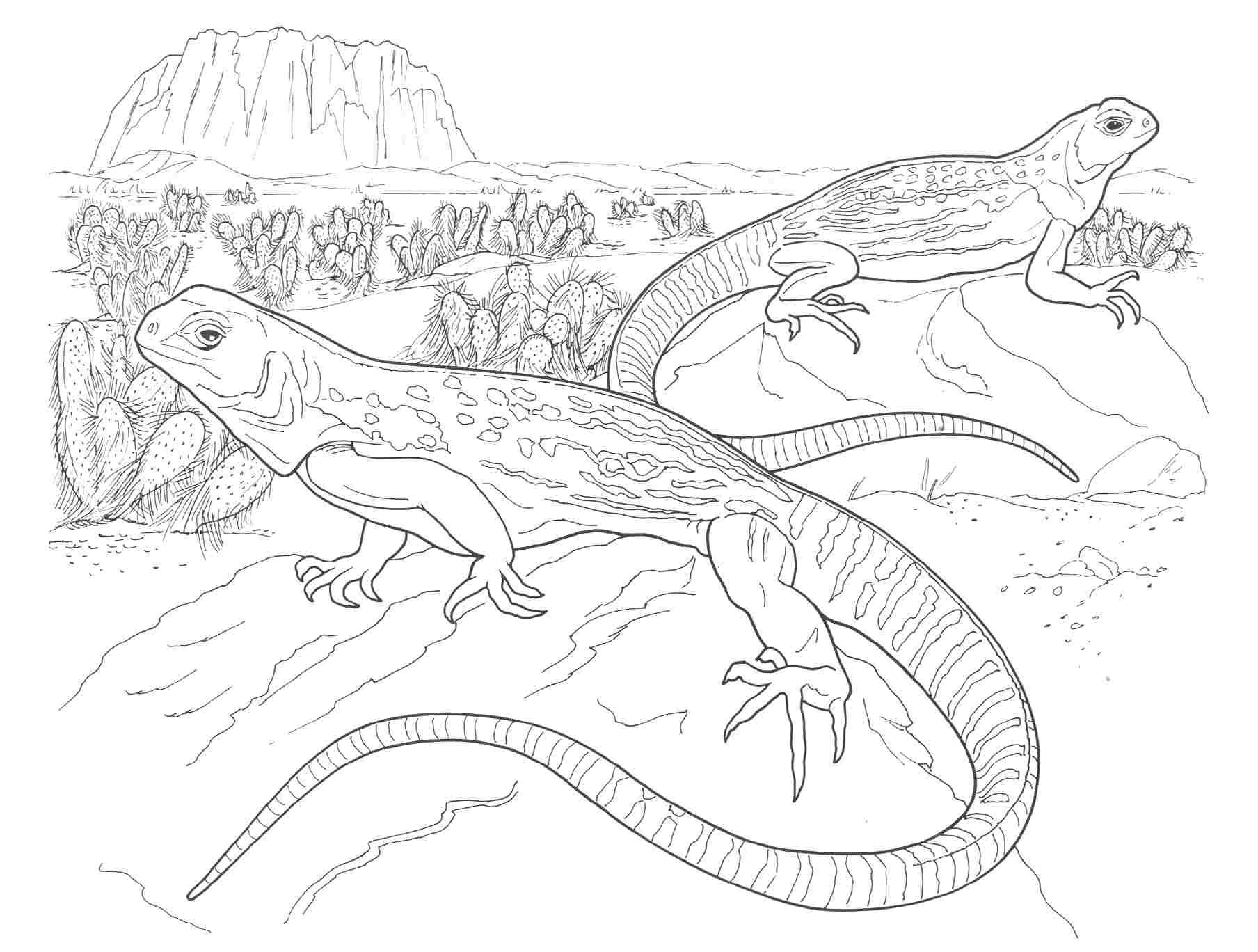 Free Coloring Pages Desert Animals : Free coloring pages of animal habitat